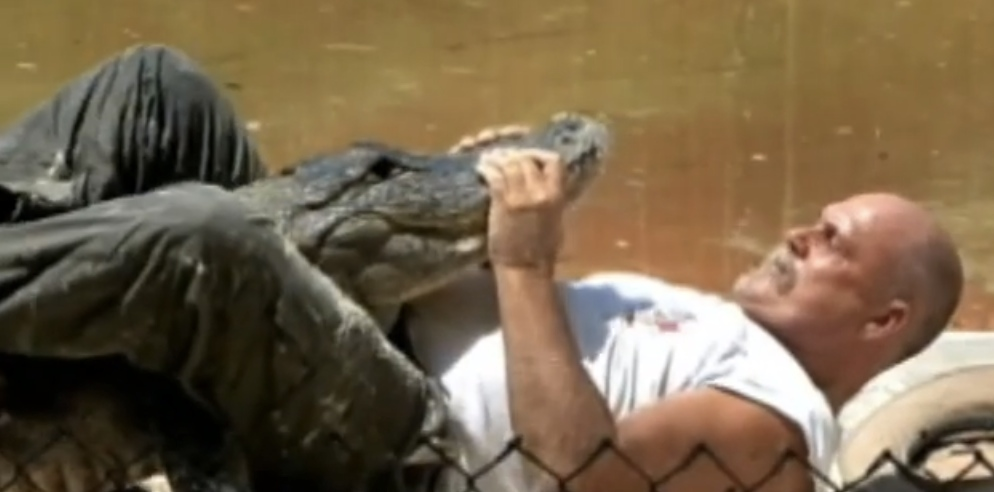 Watch Alligator Wrestler Training