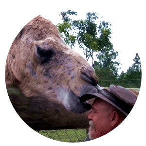 Chewy is a camel originally from a farm in Central Florida where he got beat up by other male camels to a point that the owner did not want to deal with it anymore...