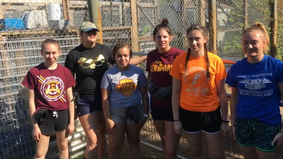 Student volunteering at the Everglades Outpost (video)