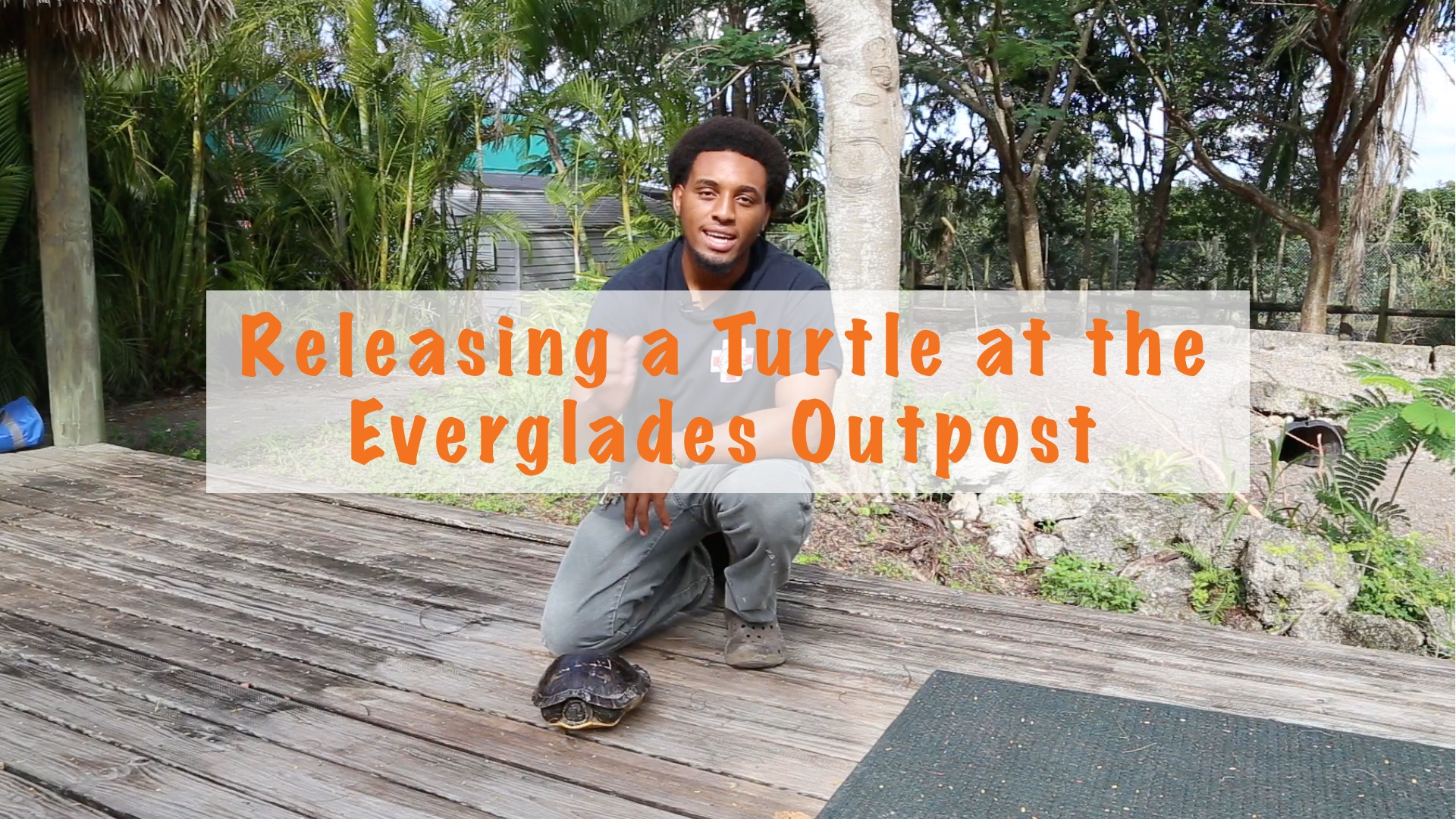 Releasing a turtle at the Everglades Outpost
